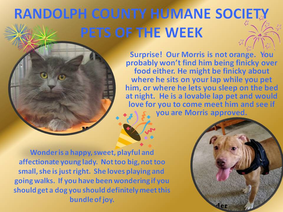 This image has an empty alt attribute; its file name is RANDOLPH-COUNTY-HUMANE-SOCIETY-68.jpg